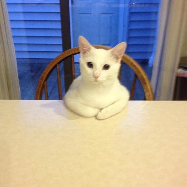 Katze mit verschränkten Armen am Tisch